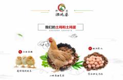 柠农农业提供生态跑山鸡鸡蛋,原产地直供!