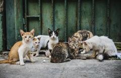 """想和你一起猫在家,雀巢咖啡携手微博""""益""""起温"""